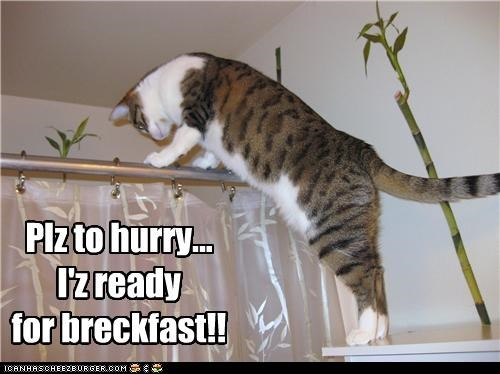 breakfast,caption,captioned,cat,climbing,hurry,impatient,peeking,please,ready,request,shower,Staring,waiting