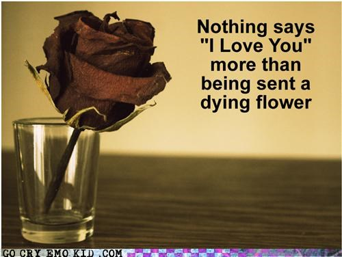 dying,emolulz,Flower,i love you,rose,Valentines day