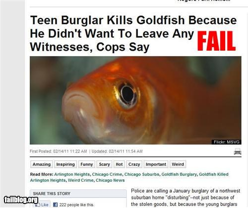 facepalm,failboat,goldfish,news,pets,really,witness