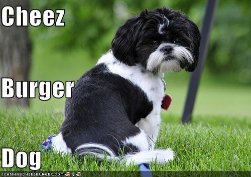 Cheezburger Image 4461767680