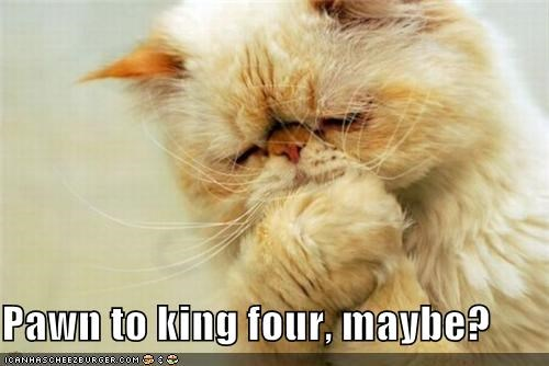 caption captioned cat chess contemplating four king maybe thinking thought - 4461985792