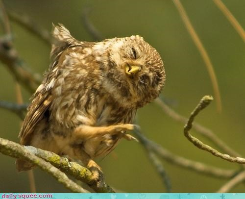 dancing,feet,happy,Owl,perching,squee spree,talons