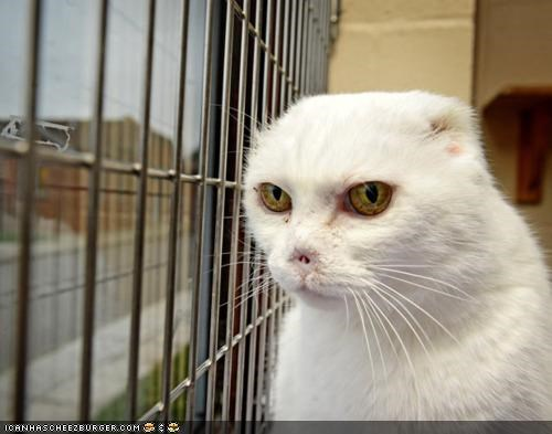 adopt cancer home news Sad story voldemort voldemort cat - 4462348288