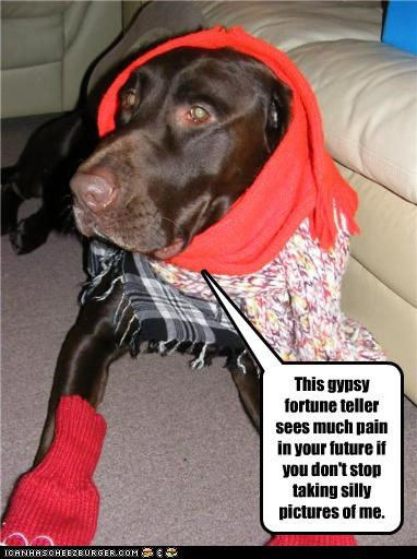 do not want,dressed up,foreseeing,fortune,fortune teller,future,gypsy,labrador,pain,predicting,prediction,scarf,socks,teller,threat