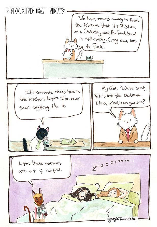news comics breaking cat Cats funny - 4462597