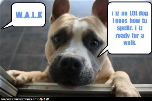 W..A..L..K i iz an LOL dog i noes how tu spellz. i iz ready fur a walk.