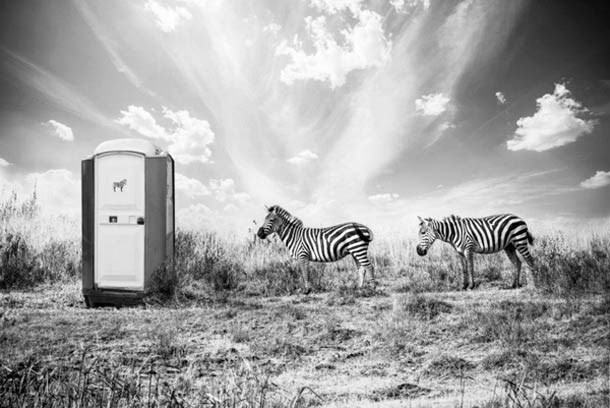 imagine kenya animals wild photographer - 4463109