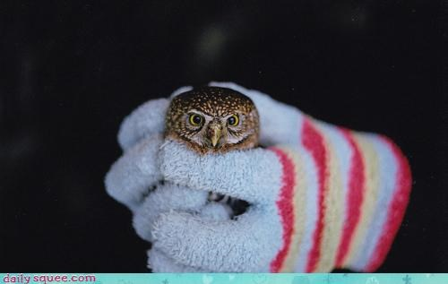 Fluffy,held,holding,let me go,Owl,please,question,squee spree,stuck,tiny