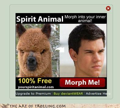 edward llama morph taylor ladner twilight werewolf - 4463172096