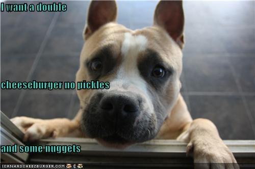 Cheezburger Image 4463184640