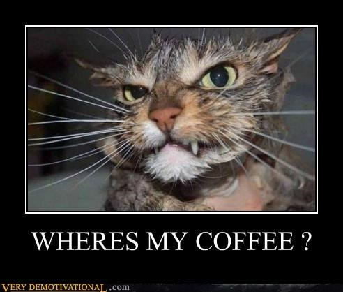 animal cat coffee - 4463271680