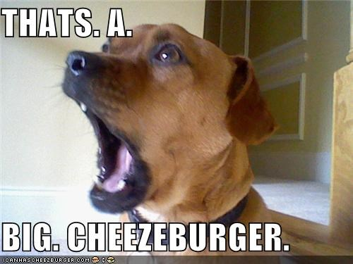 Cheezburger Image 4463921920