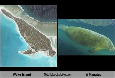 animals,island,land mass,manatee,Sea Cow