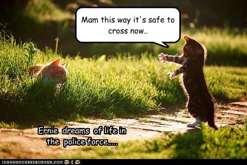 Mam this way it's safe to cross now.. Ernie dreams of life in the police force.....