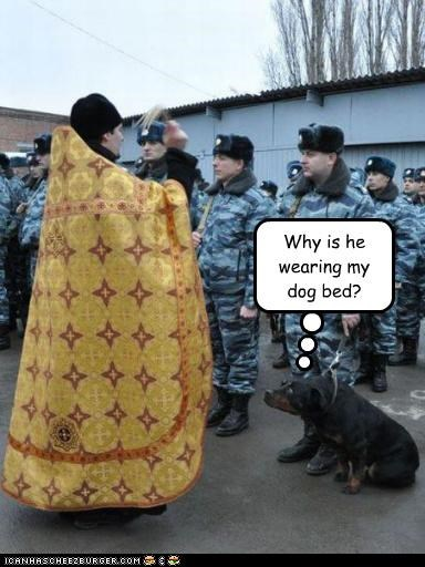 animals,dog bed,dogs,fashion,military,religion