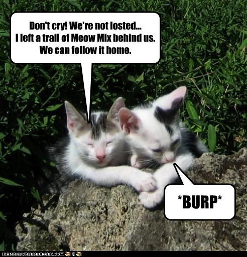 accident bread breadcrumbs burp caption captioned cat Cats crumbs cry crying dont following home kitten lost mistake not oops plan ruined trail - 4464711680