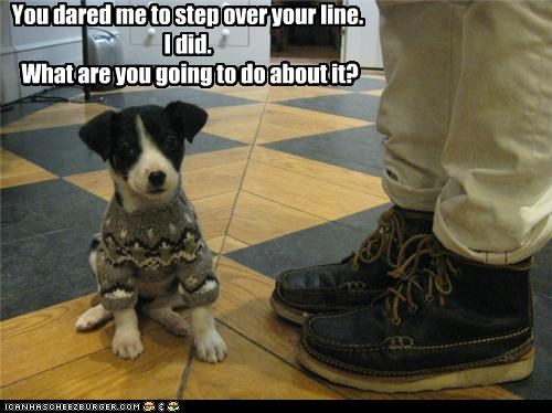 accepted,border collie,challenge,dare,did,dressed up,line,over,puppy,smug,step,sweater,tiny