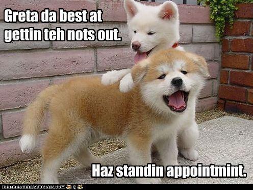 appointment massage pun puppies puppy shiba inu standing - 4464899328