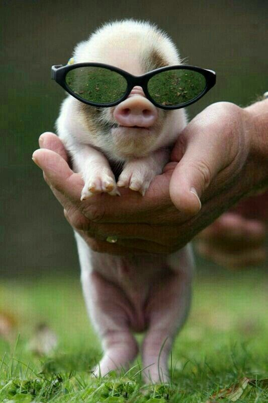 funny list of animals wearing glasses