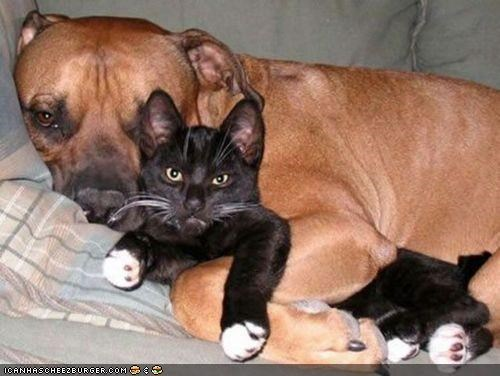 cuddles,cuddling,dogs,goggies r owr friends,grumpy,interrupted,Interspecies Love