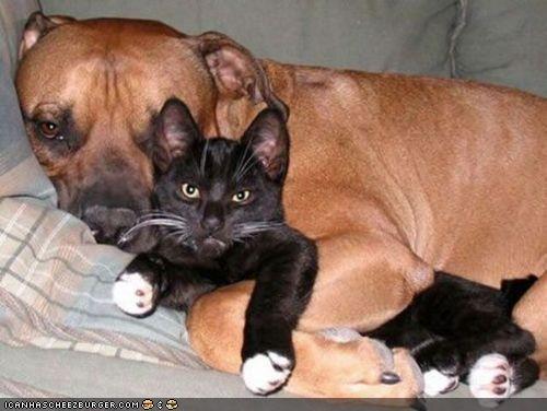 cuddles cuddling dogs goggies r owr friends grumpy interrupted Interspecies Love - 4465088512