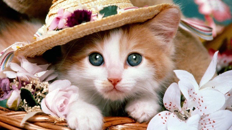 cats wearing some very cute hats
