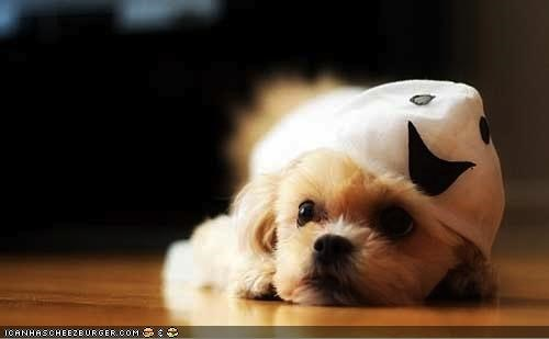 boo,costumed,cyoot puppeh ob teh day,dressed up,floor,ghost,laying,puppy,scary,whatbreed