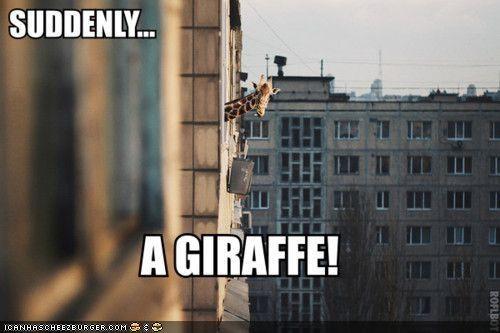 building city giraffes suddenly surprise wtf - 4465682176