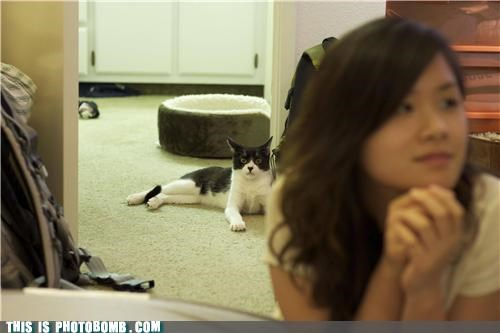 bad puns cat Caturday girl photobomb
