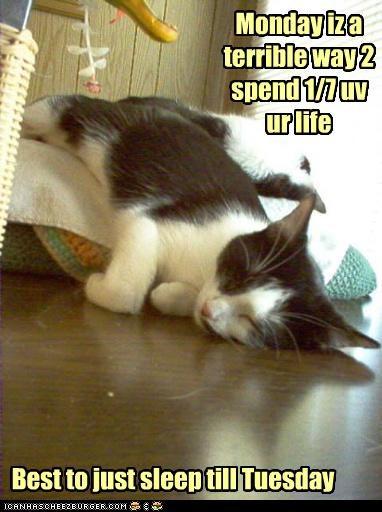 advice best caption captioned cat Hall of Fame idea life monday sleep sleeping terrible tuesday until way - 4466238976