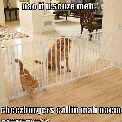 Cheezburger Image 4466337024