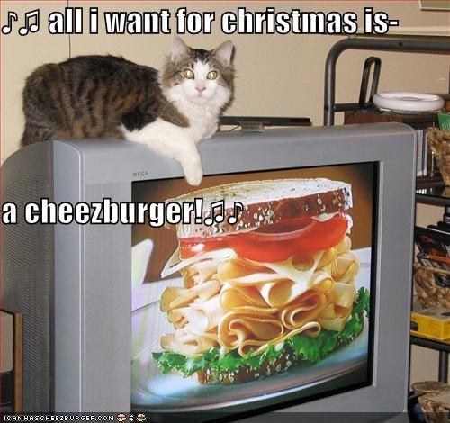 Cheezburger Image 4466720256