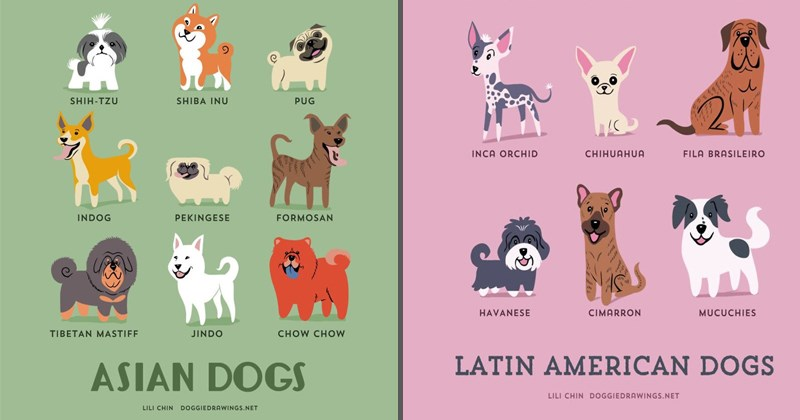 Cool infographics of dogs around the world by Lili Chen.