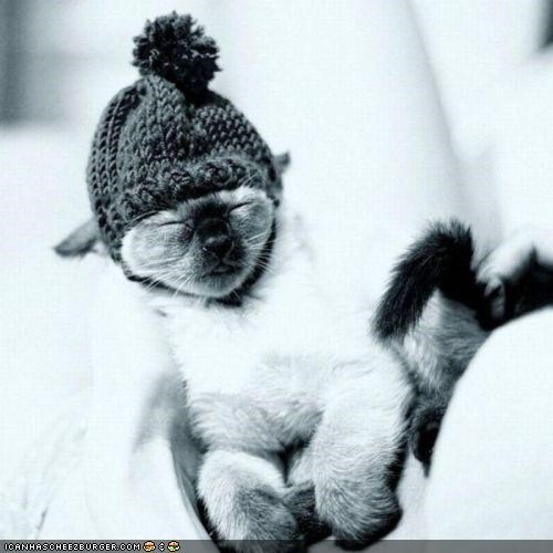 asleep-tired,black and white,cyoot kitteh of teh day,hat,knit,sleepy,warm