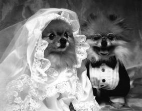 oscar dog wedding john legend Show Me Campaign - 446725