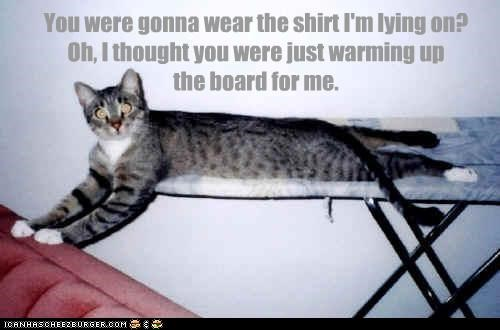 board caption captioned cat confused helping intention iron lying shirt thought - 4467340032