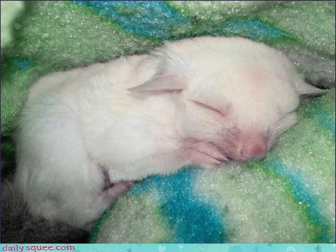 cuddling dreaming sleeping tiny whatsit whatsit wednesday - 4467994880