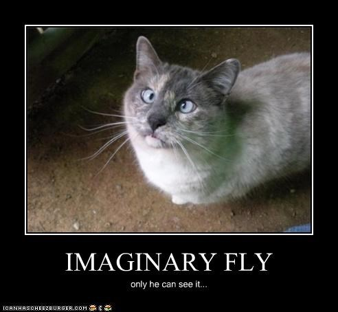 IMAGINARY FLY only he can see it...