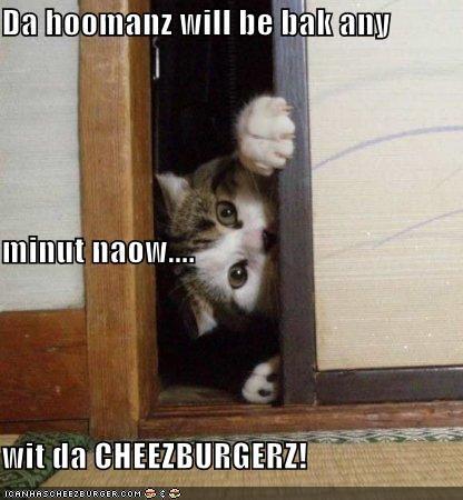 Cheezburger Image 4468460288
