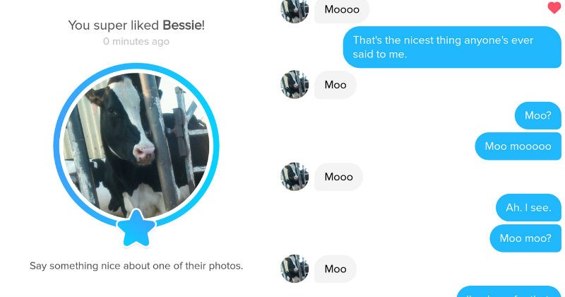 Girl matches with a cow on Tinder and absolute ridiculousness ensues in their conversation.