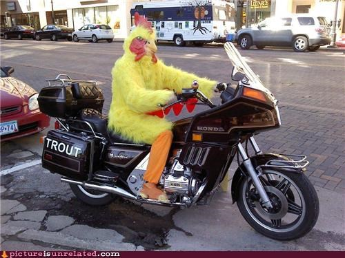chicken,motorcycle