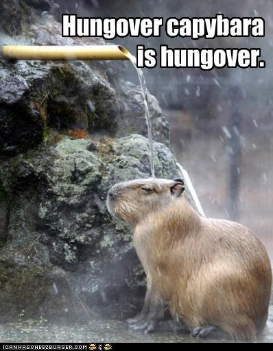 Hungover capybara is hungover.