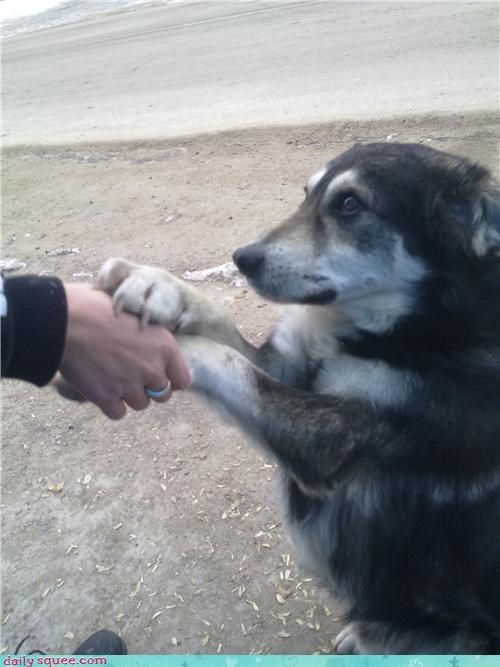 beautiful bless blessed blessing dogs hands holding husky idea rule - 4468858624