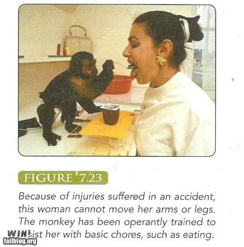 animals,cute,hacked,monkey