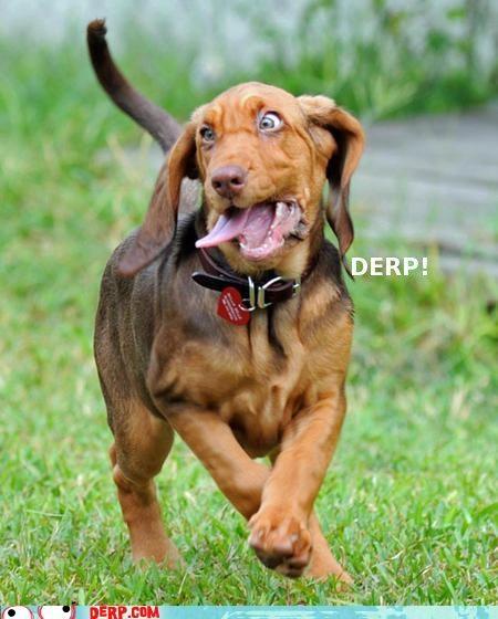 animals critters derp dogs grass underdog - 4469467904