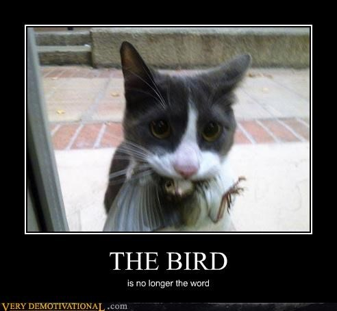 animals bird cat eaten yum - 4469727488