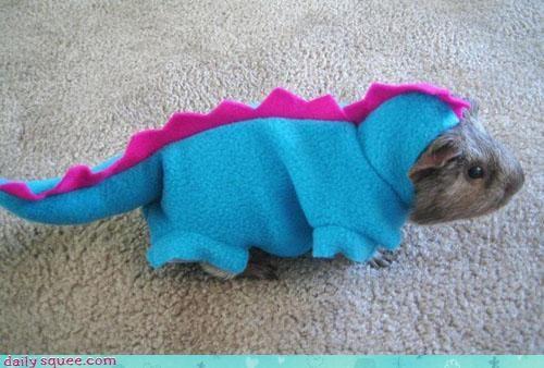 costume,dinosaur,dressed up,ferocious,fur,guinea pig,prefix,pun,squee