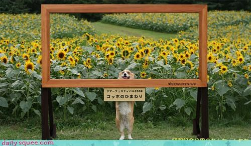 acting like animals,corgi,davinci,frame,japanese,leonardo davinci,mona lisa,sunflowers,title,translating,translation,Van Gogh,Vincent van Gogh