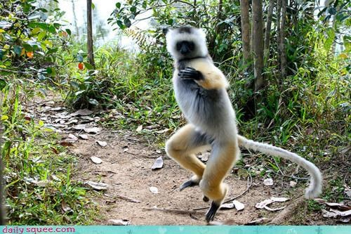 acting like animals attack black belt chop defending defense judo lemur martial arts master self defense - 4469892864