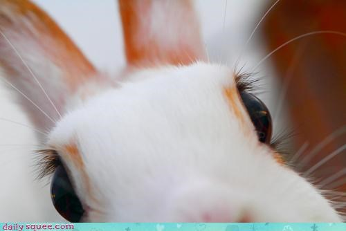 boop boopable booping bunny close desire nose personal pun rabbit resisting up urge zoom zoomed in - 4469894144